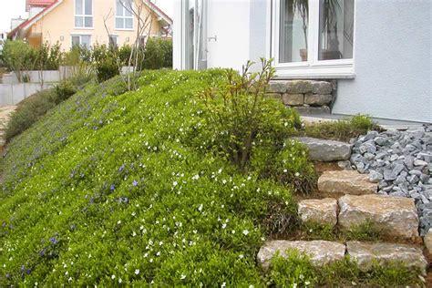 Pflanzen Für Hangbefestigung by Bodendecker Am Laufenden Meter Gartentechnik De