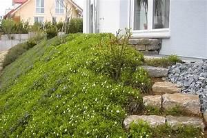 Hang Bepflanzen Bodendecker : bodendecker am laufenden meter ~ Lizthompson.info Haus und Dekorationen