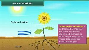 Mode Of Nutrition