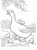 Coloring Goose Pages Baby Birds Printable Popular Library Clipart Coloringhome sketch template