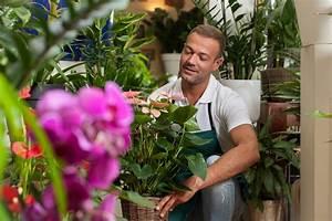 Livraison Fleurs à Domicile : livraison de fleurs domicile fleuriste en ligne plus ~ Dailycaller-alerts.com Idées de Décoration