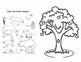 Forest Animals Coloring Rainforest Pages Tree Animal Trees Fairy Printable Drawing Apple Habitat Colouring Getdrawings Getcolorings Amazing Hard Print Ng sketch template