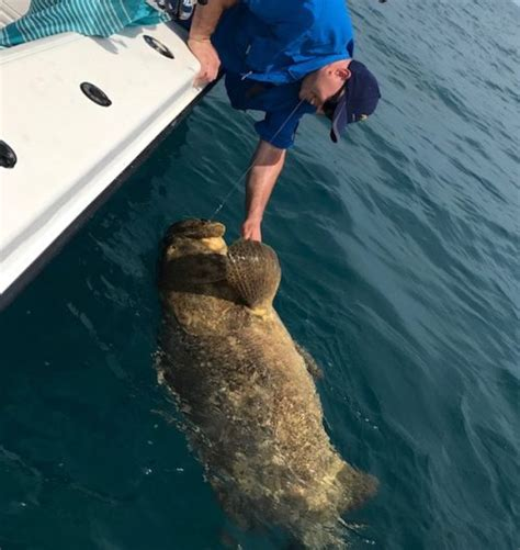 grouper fishing goliath fish boat while side water sea deep florida fl hooks quickly removed taken still them