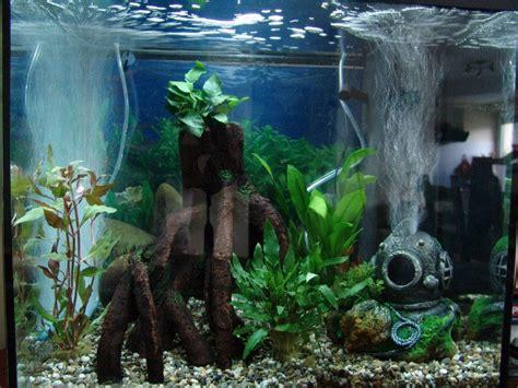 nouvel aquarium toujours vide forum aquarium