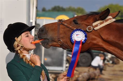 horse jumping sport facts interesting horses equestrian sports form open