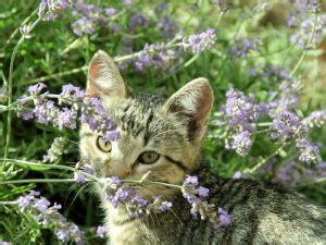 ways   rid  cat fleasnaturally
