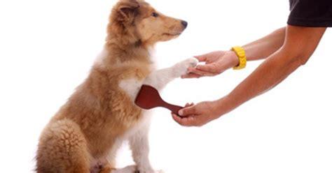 comment toiletter et brosser le chien purina