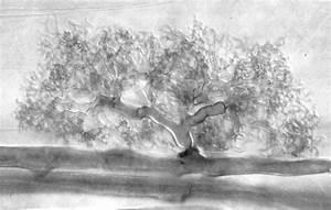 Ectomycorrhizae Slide | www.imgarcade.com - Online Image ...