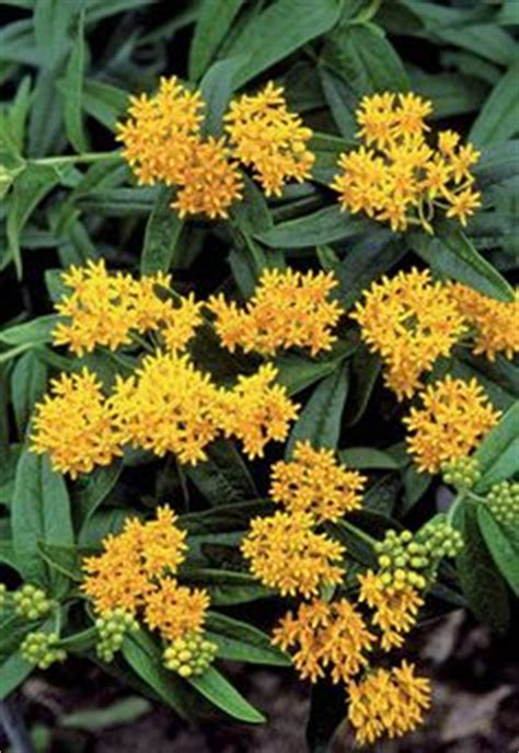 images  yellow flowering plants  pinterest