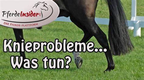knieprobleme beim pferd  tun youtube
