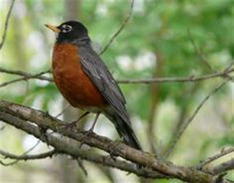 common feeder birds  western north america texas parks
