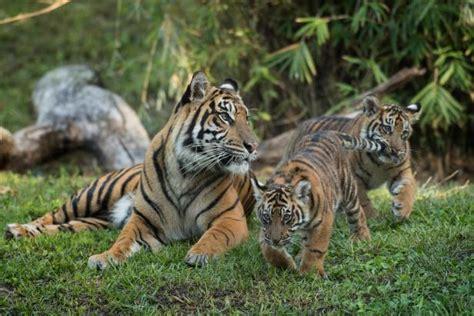 celebrate earth day  disneys animal kingdom travel
