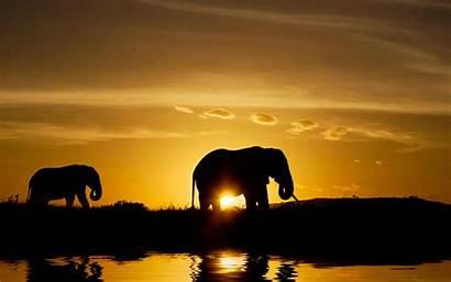 African Safari Animals Africa Sunset Elephant Pixelstalk