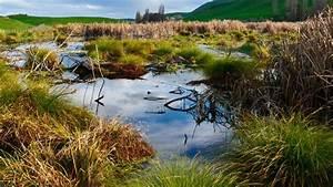 Wetlands  Habitats