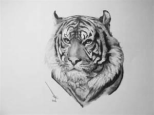 Tiger Pencil Sketches Tiger Pencil Drawing Pencils Hb To ...