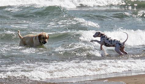 Dog Beaches On Lake Michigan