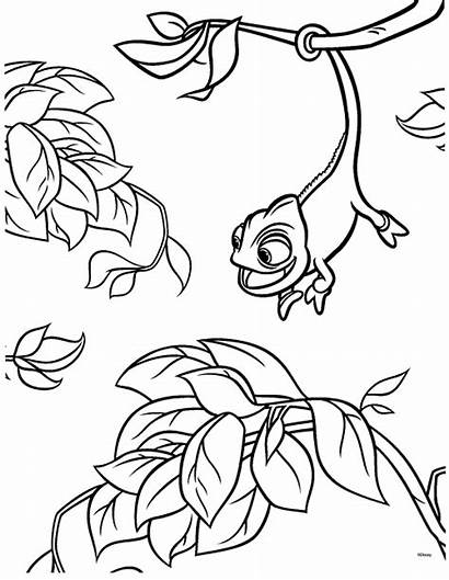 Tangled Coloring Pages Pascal Chameleon Rapunzel Disney