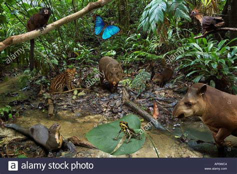 amazon rainforest animals montage stock photo  alamy