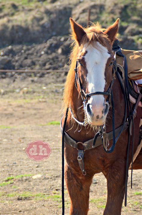 horseback riding   madonna inn donnahupcom