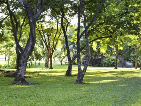 How To Grow Grass In The Shade