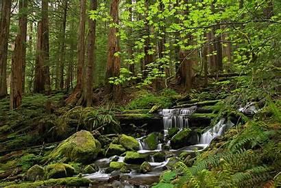 Desktop Forest Stream Backgrounds Wallpapers Nature Landscape