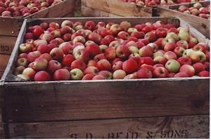 Australian Apple Export Manual And Post