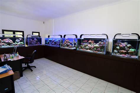 pacific sun aquarium lighting system pacific sun aquarium article digest