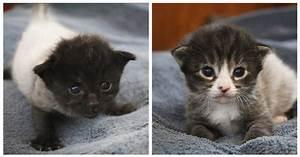 I gattini con il pelo che cambia colore Gattissimi