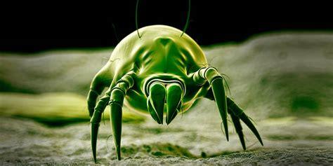 water indoor the health dangers of dust mites