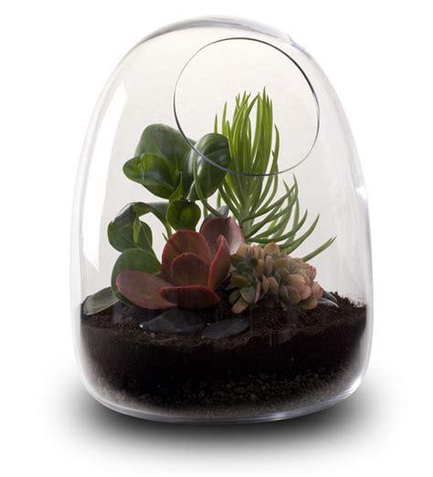 blown terrarium hand blown glass terrariums from bevara design freshome com