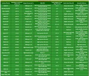Lion Growth Chart Watermelon Seeds Lion Seeds Co Ltd