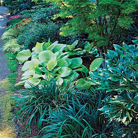 border plants shade create a shady border jersey plants direct blog