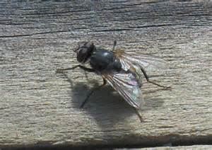 Image result for images of housefly in winter