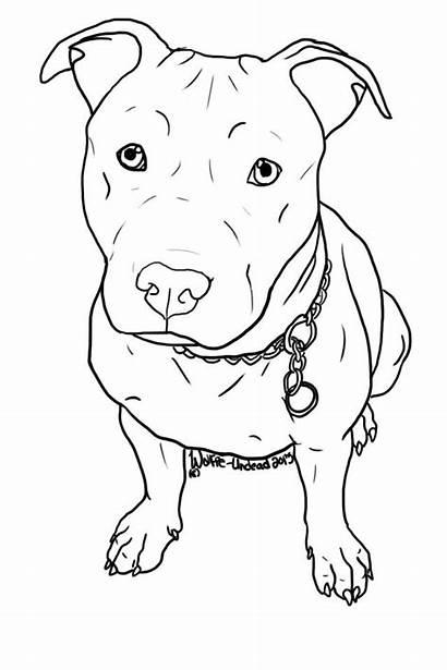 Pitbull Draw Dog Face Drawing Tattoos