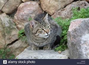 Katze Im Haus Halten : katze gestreift crouch treppen tiere s ugetiere ~ Lizthompson.info Haus und Dekorationen