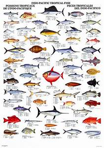 Indo Pacific Fish | Fishing tips with fishbox | Pinterest ...