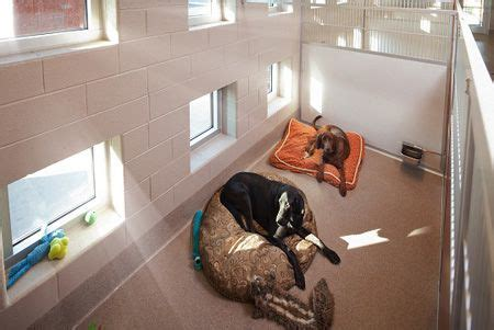 images   dream business puppy daycare