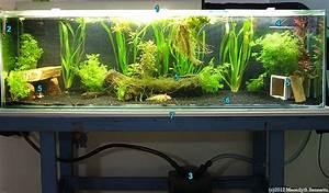 Axolotls - Housing in Captivity