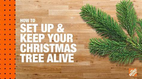 set     christmas tree alive