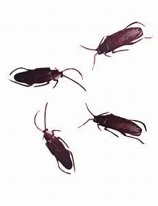 Können Kakerlaken Fliegen : holiday on cucaracha bong zeitung ~ Watch28wear.com Haus und Dekorationen