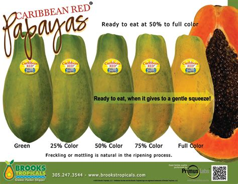 how to tell if a papaya is ripe brooks tropicals caribbean red papayas