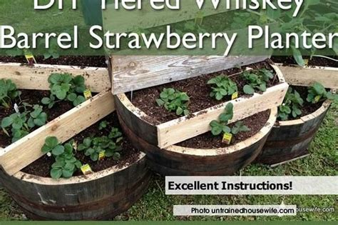 How To Make An Awesome Tiered Whiskey Barrel Strawberry