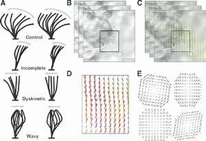 Properties Of Cm   A  Schematic  Hand
