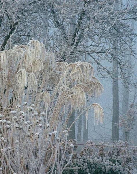 images  winter interest garden landscape