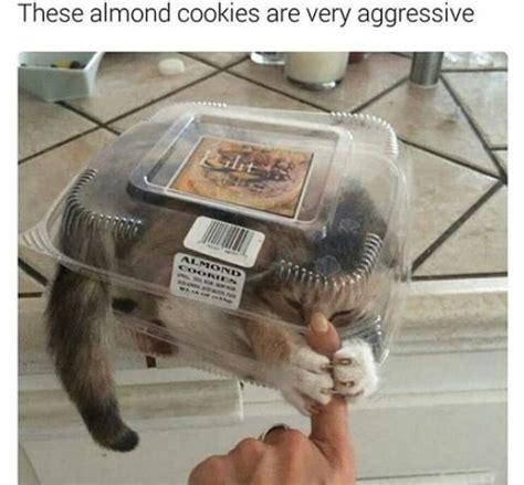 funny animal memes barnorama