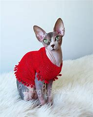 Best Sweater Kittens Ideas And Images On Bing Find What Youll Love