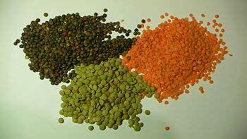 lentil  world encyclopedia