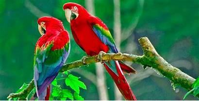 Birds Wallpapers Paradise Bird Parrot Flying Themes