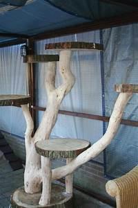 More For Cats Kratzbaum : idea for making an outdoor cat tree cat crazy pinterest outdoor cat tree outdoor cats ~ Whattoseeinmadrid.com Haus und Dekorationen