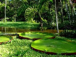 Amazon Rainforest   GALAHOTELS BLOG